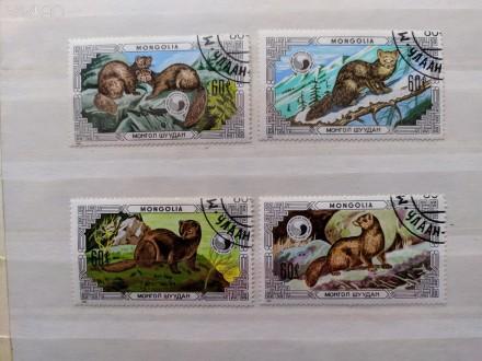 """Набор марок. """"Фауна"""".""""Животные. Выдра"""". Монголия. Набор состоит из 4 марок. Го. Запорожье, Запорожская область. фото 1"""