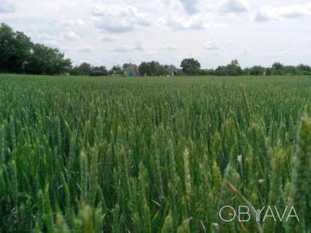 Продам земельній участок в с.Сурско-Михайловка Солонянского района