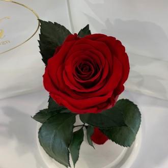 Діаметр бутона троянди 6-7 см  Розмір композиції 16*16*27 см  Колір підставк. Киев, Киевская область. фото 3