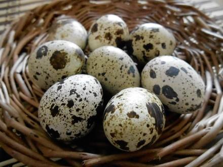 Яйца перепелиные. Миколаїв. фото 1