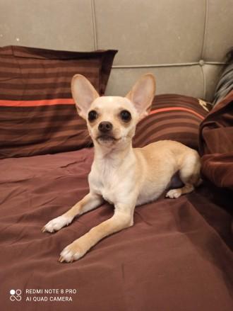 Симпатичный, обходительный, импозантный молодой пёс с активной жизненной позицие. Одесса, Одесская область. фото 2