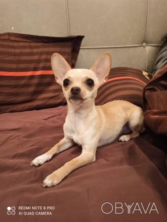 Симпатичный, обходительный, импозантный молодой пёс с активной жизненной позицие. Одесса, Одесская область. фото 1
