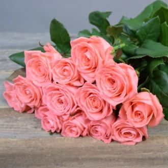 Саженцы роз, 15 сортов и спрей, самые стойкие и урожайные сорта.аоур. Николаев. фото 1